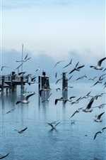 Preview iPhone wallpaper Pier, gulls, flying, water