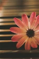 iPhone壁紙のプレビュー ピンクの花、ピアノ、音楽のテーマ