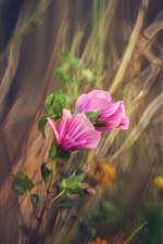 Preview iPhone wallpaper Pink flowers, grass, bokeh