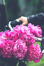 Preview iPhone wallpaper Pink peonies flowers, bicycle
