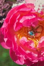 Preview iPhone wallpaper Pink rose, diamond ring, romantic