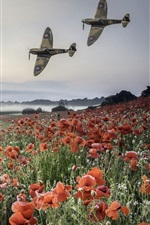Preview iPhone wallpaper Planes, poppies field, mountains, fog