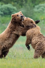 Playful two bears