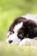 Preview iPhone wallpaper Puppy rest, grass, blurry