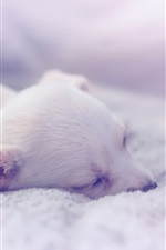 Preview iPhone wallpaper Puppy sleeping, comfort house