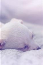 Puppy sleeping, comfort house