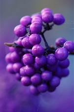 Preview iPhone wallpaper Purple berries, twigs