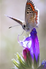 Purple flower, butterfly, bokeh