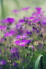 Preview iPhone wallpaper Purple little flowers, spring