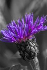 Preview iPhone wallpaper Purple petals flower macro photography