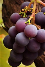Preview iPhone wallpaper Purple ripe grapes