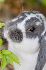 Rabbit, twigs, leaves