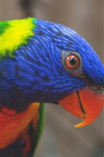 Preview iPhone wallpaper Rainbow lorikeet, parrot colorful feathers