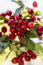 Preview iPhone wallpaper Red berries, twigs, bokeh