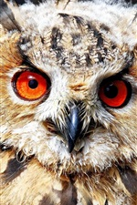 Red eyes owl, front view, feathers