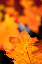 Preview iPhone wallpaper Red leaf, glare, blurry, autumn