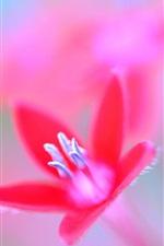 Preview iPhone wallpaper Red petals flower, stamens, macro