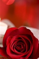 Preview iPhone wallpaper Red rose, candy, candle