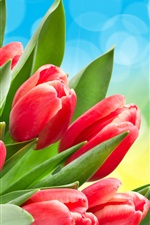 Red tulips, green leaves, bokeh