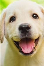 Preview iPhone wallpaper Retriever smile