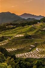 iPhone fondos de pantalla Campos de arroz, terrazas, tierras altas, cultivo, atardecer