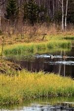River, grass, ducks, trees