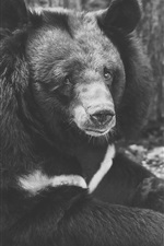 Preview iPhone wallpaper Sadness bear, black and white picture