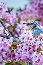 Preview iPhone wallpaper Sakura flowering, bird, spring