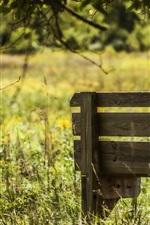 Summer, bench, grass