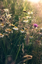 Preview iPhone wallpaper Summer, wildflowers, grass, sunshine