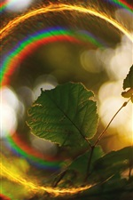 Preview iPhone wallpaper Sunlight halo, green leaves, rainbow