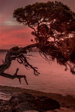 Preview iPhone wallpaper Sunset, lonely tree, sea