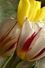 Preview iPhone wallpaper Three tulips flowers, cloth background