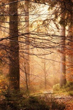 Preview iPhone wallpaper Trees, forest, sunlight, autumn