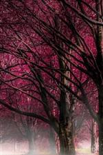 iPhone обои Деревья, красные цветы, утро, туман