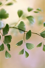 Preview iPhone wallpaper Twigs, foliage, plants, blurry background