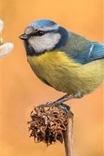 Twigs, tit, feathers, birds