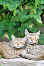 Preview iPhone wallpaper Two cats rest, green leaves