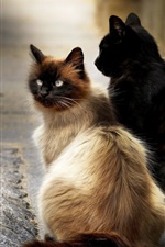 Two cats sit at street