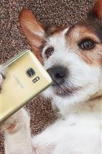 iPhone обои Две собаки, смешные, используют телефон