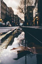 Preview iPhone wallpaper Wet street, water, dry leaf, city
