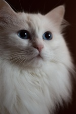 Preview iPhone wallpaper White cat, blue eyes, light circles