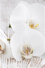 Preview iPhone wallpaper White orchid, pebbles, leaves