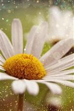 Preview iPhone wallpaper White petals chamomile, water drops, splash