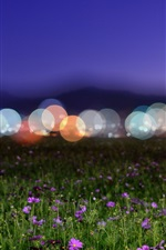 Preview iPhone wallpaper Wildflowers, night, glare