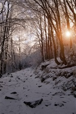 Preview iPhone wallpaper Winter, snow, mountains, trees, sun rays, Bulgaria
