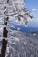 iPhone fondos de pantalla Invierno, árboles, nieve, montañas, vista superior