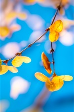 Yellow leaves, twigs, blue background, blurry