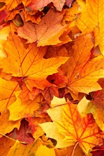 Preview iPhone wallpaper Yellow maple leaves background, autumn