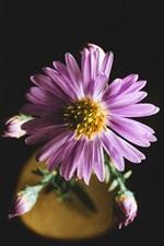 Preview iPhone wallpaper Aster, pink flower petals